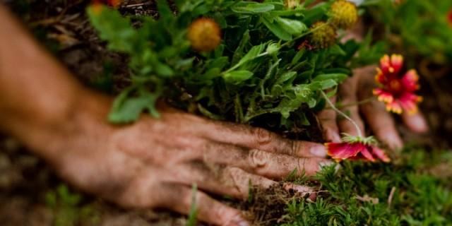 gardening-001-640x320